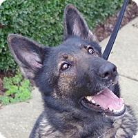 Adopt A Pet :: Hella - Greensboro, NC