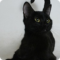 Adopt A Pet :: Sandy - Redding, CA
