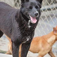 Adopt A Pet :: Little Bear - Cranston, RI