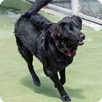 Adopt A Pet :: Atticus - Loxahatchee, FL