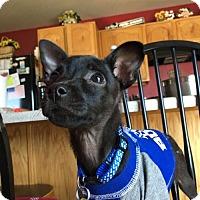 Adopt A Pet :: Blackie Chan - Salt Lake City, UT