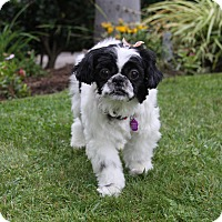 Adopt A Pet :: AURORA - Newport Beach, CA