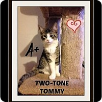 Adopt A Pet :: Tommy - Highland, MI
