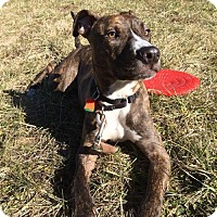 Hound (Unknown Type) Mix Dog for adoption in Asheville, North Carolina - Edgar (courtesy post)