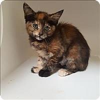 Adopt A Pet :: Maple - Riverside, CA