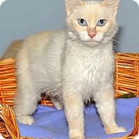 Adopt A Pet :: Fergie - Gatineau, QC