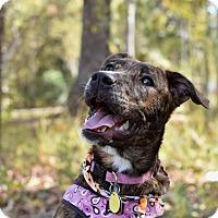 Adopt A Pet :: Fiona - Summerville, SC