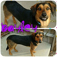 Adopt A Pet :: Bayley - Garden City, MI