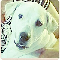 Adopt A Pet :: Sam - Miami, FL