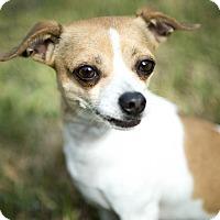 Adopt A Pet :: Bobby - Seattle, WA