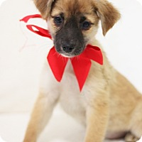 Adopt A Pet :: Cindy - Dalton, GA
