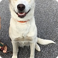 Adopt A Pet :: Luna - Mary Esther, FL
