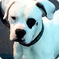 Adopt A Pet :: Marvel - Reno, NV