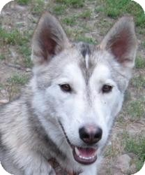Husky Mix Dog for adoption in Kettle Falls, Washington - Rocket