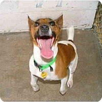 Adopt A Pet :: Cody - Winter Haven, FL