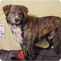 Adopt A Pet :: Ajax/Pending - Zanesville, OH