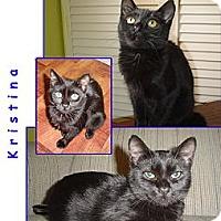 Adopt A Pet :: Kristina - Bunnell, FL