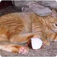 Adopt A Pet :: Oscar - Pending - Warren, OH