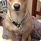 Adopt A Pet :: Laynee