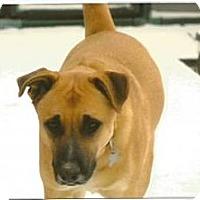 Adopt A Pet :: Bojangles - Byhalia, MS