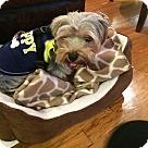 Adopt A Pet :: Happy Jack