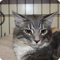 Adopt A Pet :: Leonardo - Little Falls, NJ