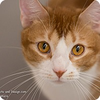 Adopt A Pet :: Finnick - Fountain Hills, AZ