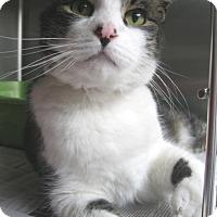 Adopt A Pet :: Willie - North Kingstown, RI