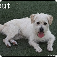 Adopt A Pet :: Scout - Rockwall, TX