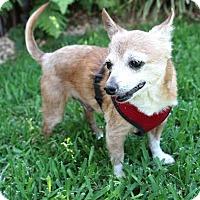 Adopt A Pet :: Cowboy - Studio City, CA