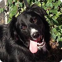 Adopt A Pet :: HOLMES - San Pedro, CA