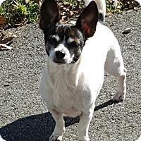 Adopt A Pet :: Sage - Homewood, AL