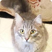 Adopt A Pet :: Baby - Phillipsburg, NJ