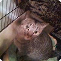 Adopt A Pet :: Tigger - Colmar, PA