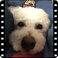 Adopt A Pet :: Adopted!! Leo - N. TX - Tulsa, OK