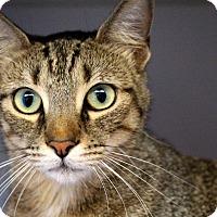 Adopt A Pet :: Mochaccino - Sarasota, FL