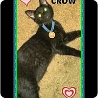 Adopt A Pet :: Crow - Highland, MI