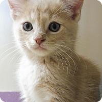 Adopt A Pet :: Idres - Creston, BC