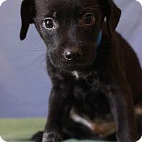 Adopt A Pet :: Edward - Waldorf, MD