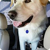 Adopt A Pet :: Thunder - Marina del Rey, CA