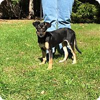 Adopt A Pet :: MITZIE - West Milford, NJ