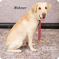 Adopt A Pet :: Webster - Buckeystown, MD