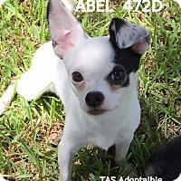 Adopt A Pet :: Abel - Spring, TX