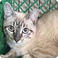 Adopt A Pet :: Baldwin - Hammond, LA