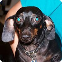 Adopt A Pet :: Lucy - West Palm Beach, FL