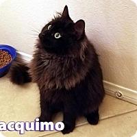 Adopt A Pet :: Jacquimo - Mission Viejo, CA