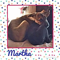 Adopt A Pet :: Martha - Enid, OK