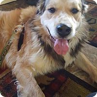 Adopt A Pet :: Boomer - Louisville, IL