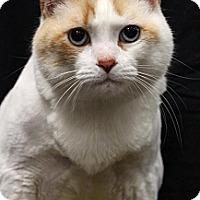Adopt A Pet :: Beau - Sacramento, CA