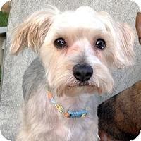 Adopt A Pet :: Murphy - Carmine, TX